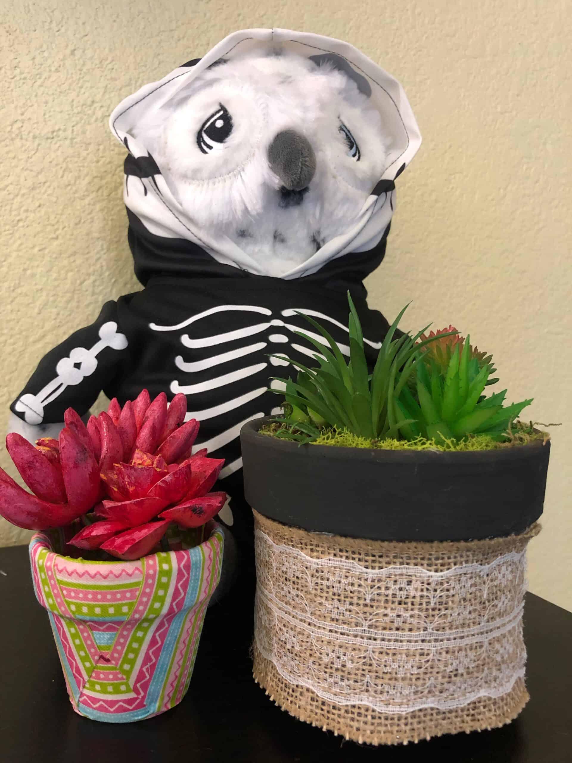 fabric plant pots- paradise activity company